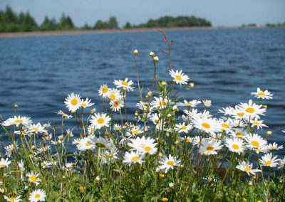 Summer, Flowers and the shiny water of the Redmires Reservoirs.
